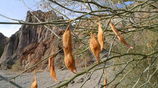 透過植物DNA還原古代植物生態
